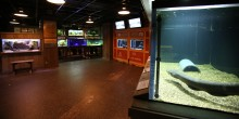The electric fishes exhibit with an electric eel in a habitat