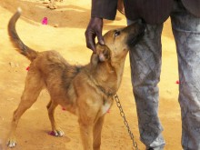A dog with a chain collar and leash stands beside a person's legs. The person is petting the dog's head.