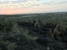 A group of baboons seated on a cluster of rocks in Ethiopia at sunset