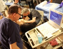 Veterinarian Dr. Don Neiffer looks at an ultrasound as Research Biologist Dr. Pierre Comizzoli artificially inseminates giant panda Mei Xiang