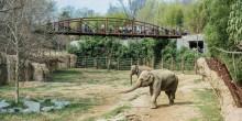 Kamala and Maharani at the Elephant Trails exhibit.