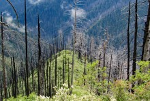 Loss of seed sources over successive short-interval fires in the Klamath Mountains.