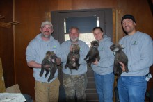 Four maned wolf pups held by keepers and veterinarians during their first checkup