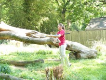 A volunteer uses a shovel to move something off a log in a grassy exhibit yard