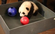 Bei Bei in a box playing with balls