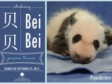 Bei Bei naming announcement
