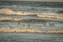 a flock of birds flies over beach waves