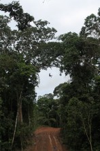 A photo of a person repelling from a canopy bridge in a tree