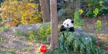Bei Bei in the Sun