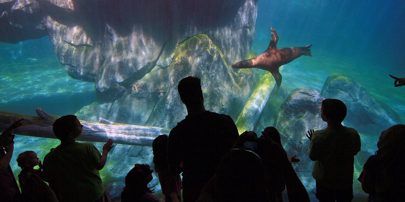 Visitors watch sea lions swimming from the underwater viewing area