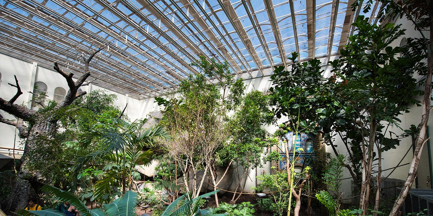 inside view of the open atrium