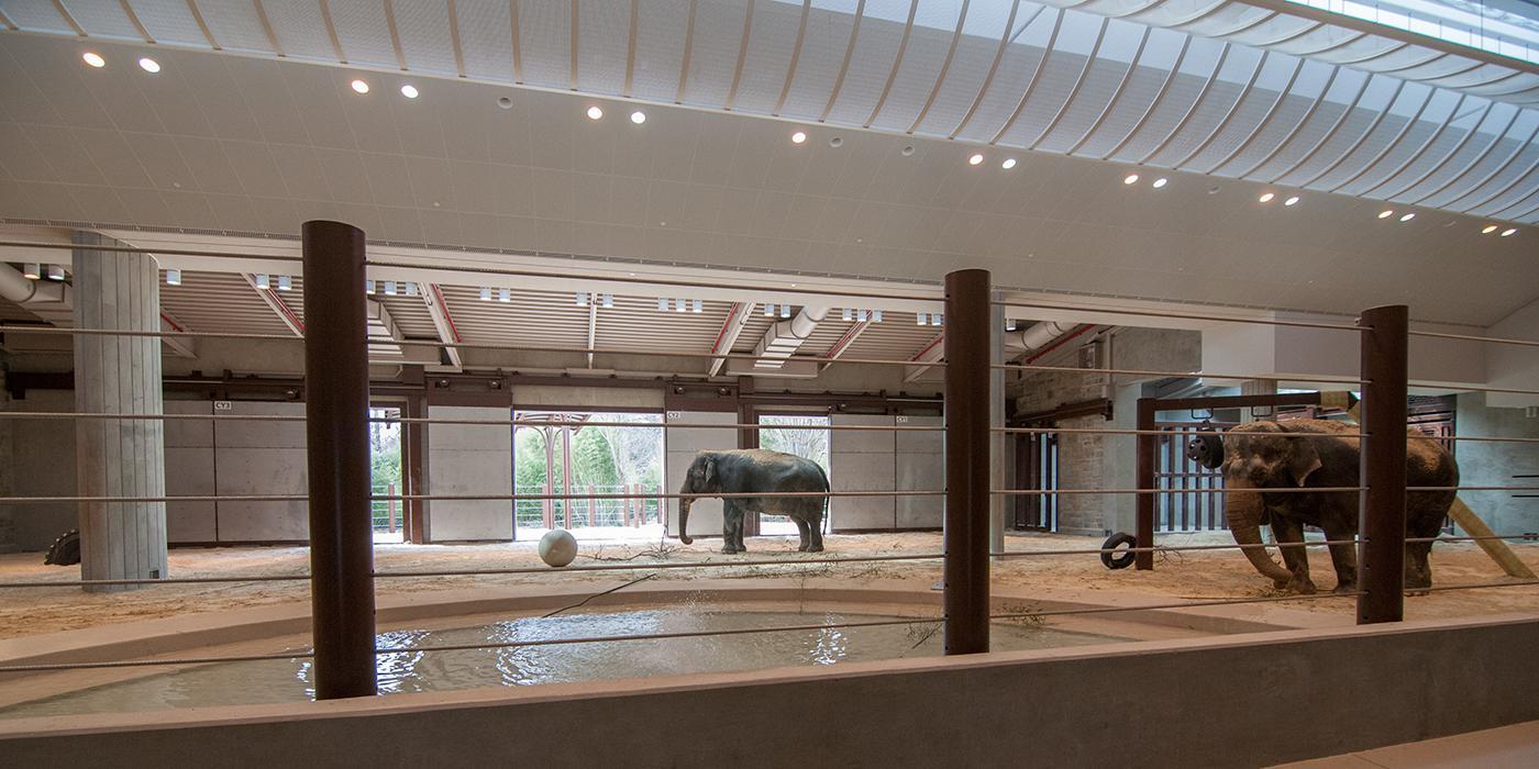 interior of the elephant community center