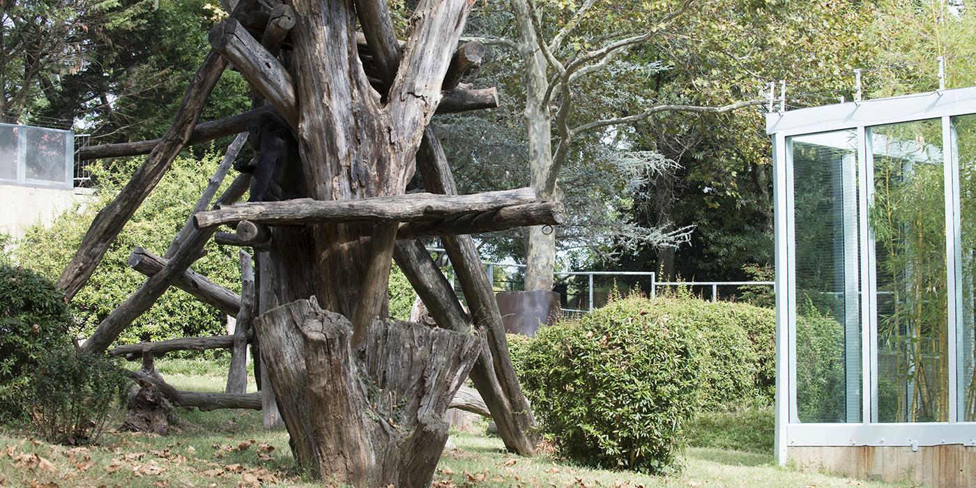 great ape yard