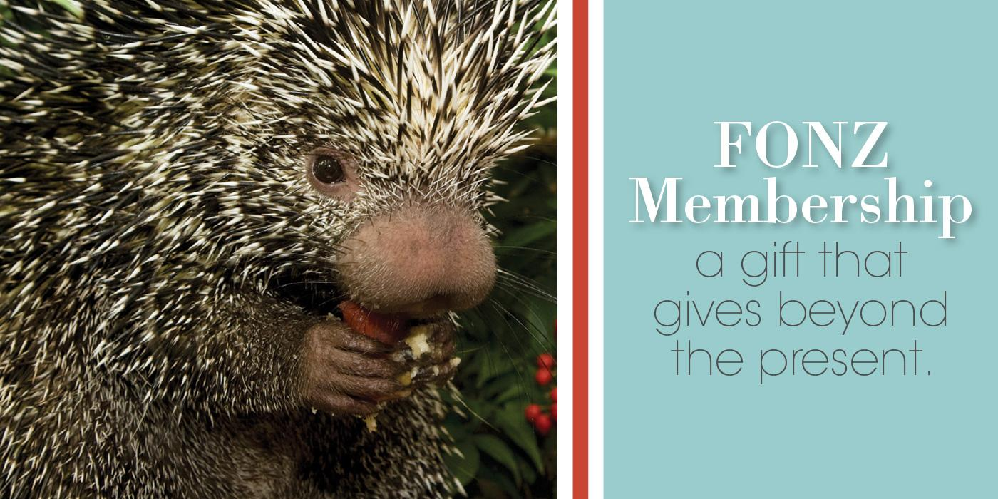 "porcupette photo with text ""FONZ Membership, a gift that gives beyond the present"""