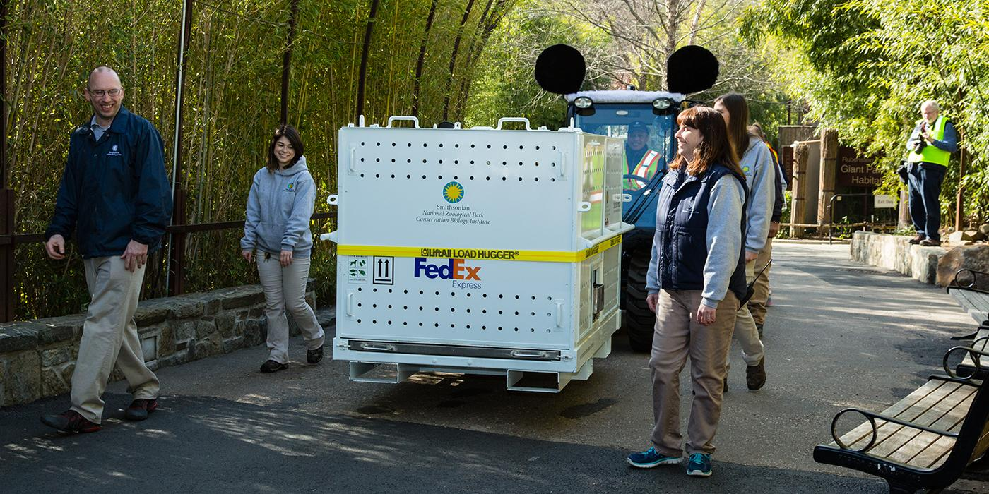Bao Bao in a crate accompanied by zookeepers