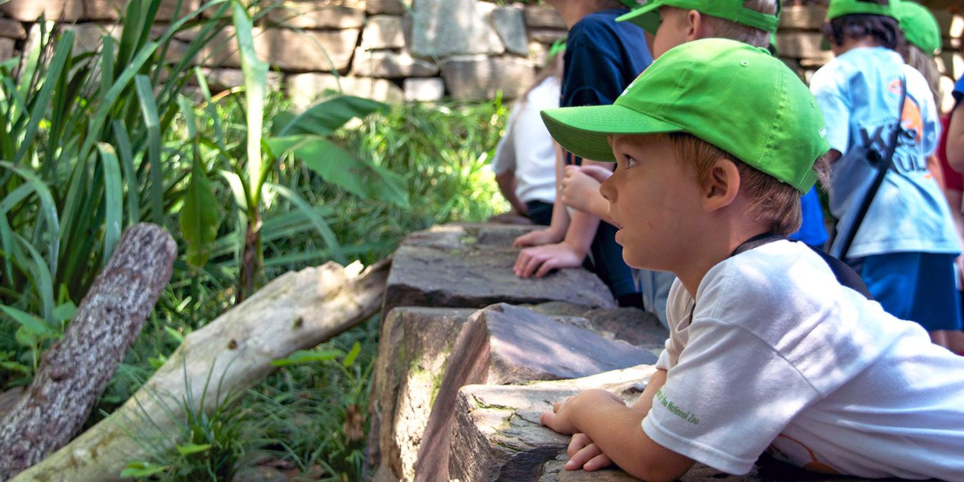 small boy staring at an animal exhibit