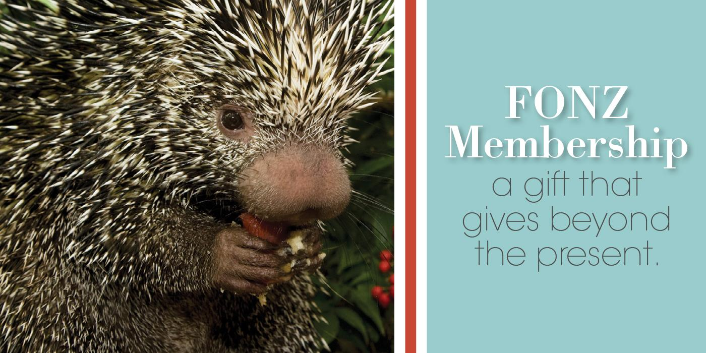 """photo of porcupette with text """"FONZ Membership, a gift that gives beyond the present"""""""