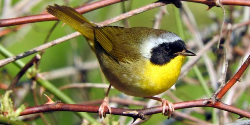 small, brightly-colored bird