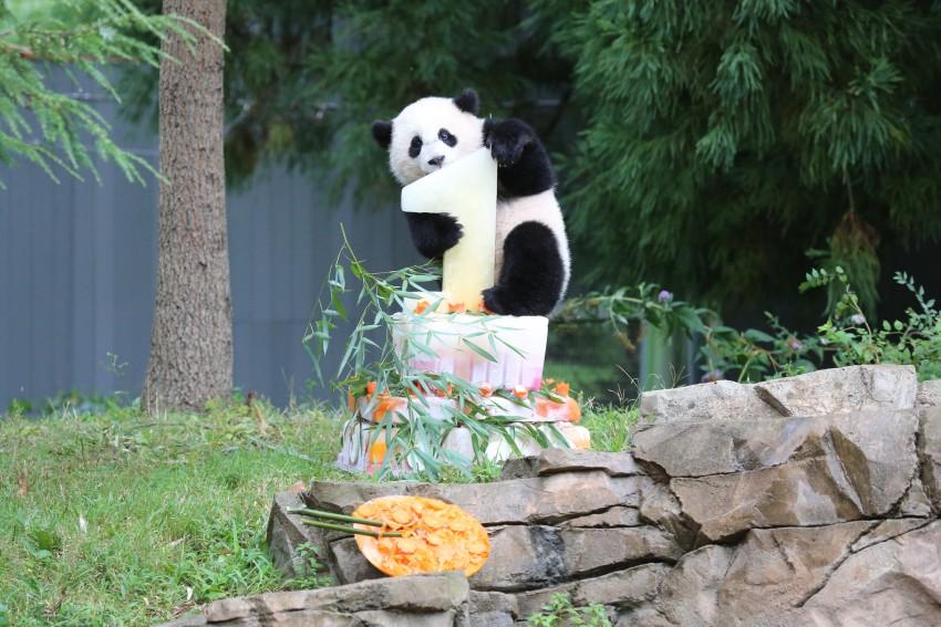 Bao Bao First Birthday