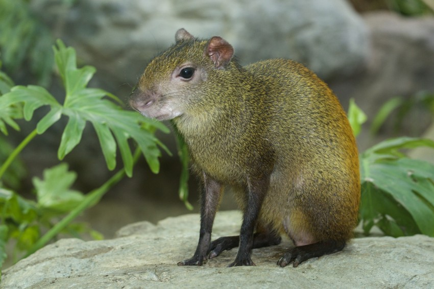 small mammal with long front legs