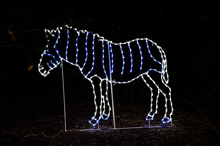 ZooLights Zebra Light Display