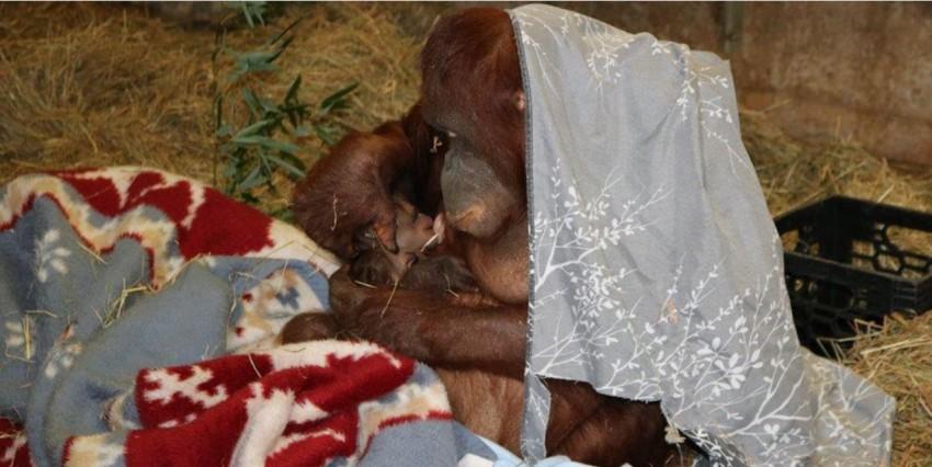Batang nurses her infant.