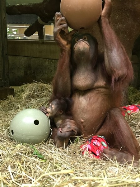 Batang and Redd with enrichment.