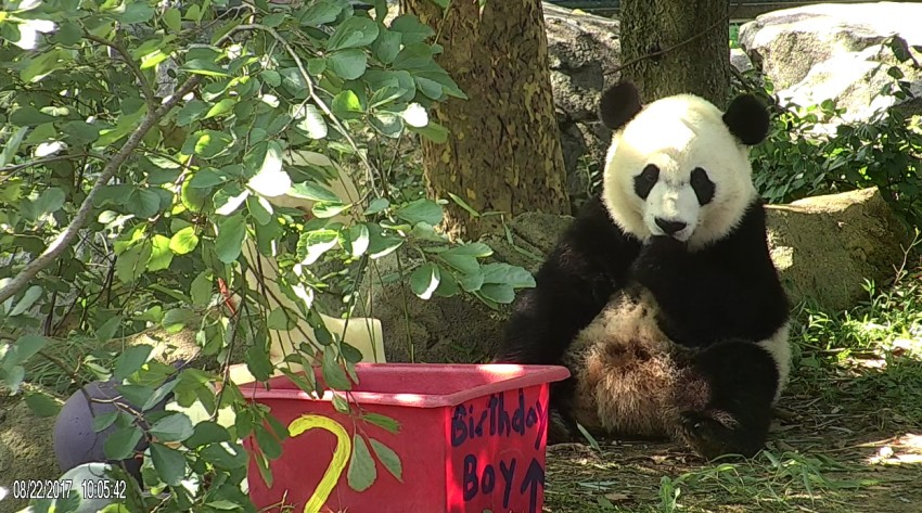 Bei Bei eating his birthday cake.