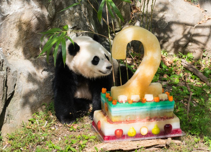 Bao Bao Second Birthday