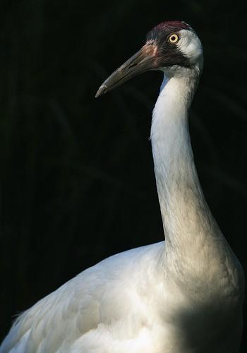 tall bird with long neck and beak