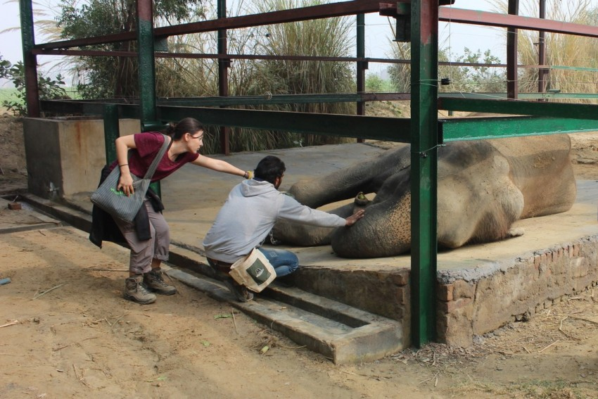 Wildlife SOS Mahout