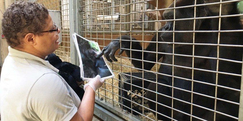 Animal keeper Melba Brown shows Calaya photos of mother gorillas caring for their infants.