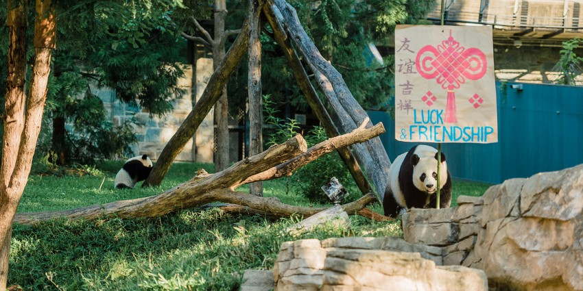 Mei Xiang with Zhuazhou poster for luck and friendship