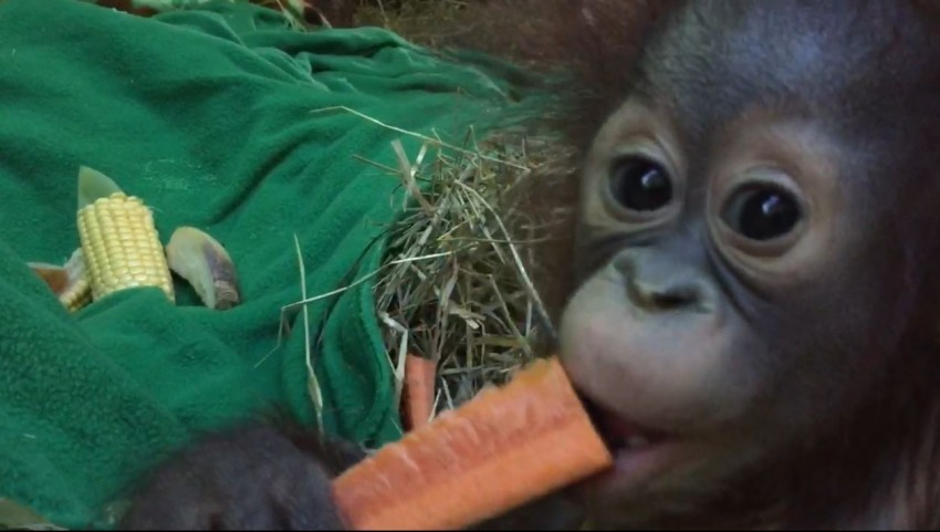 Redd eating a carrot
