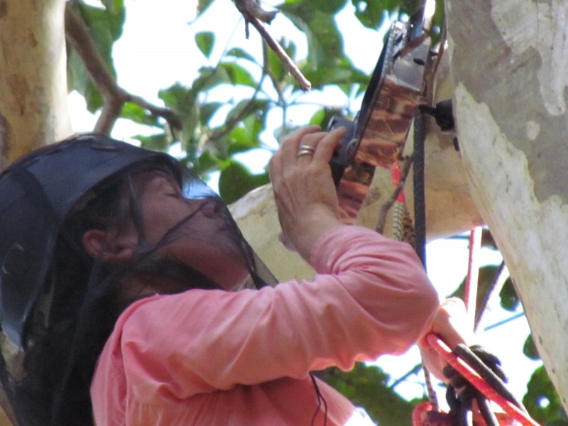 A scientist conducting research in a tree