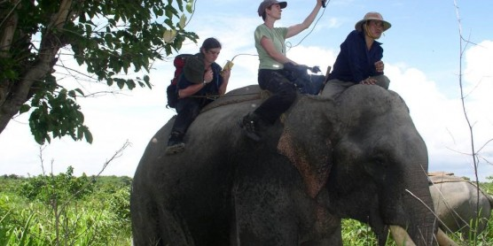 a woman sits on the back of an elephant holding up an antenna