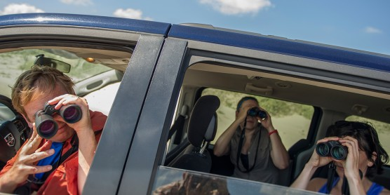 three people looking out a car window with binoculars