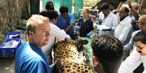 Zoo staff train colleagues in India.