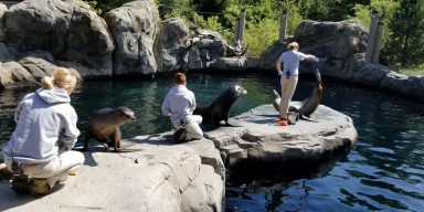 Zookeepers training sea lions at the Zoo's American Trail exhibit