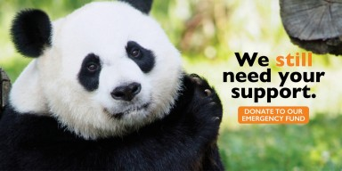 National Zoo Emergency Fund