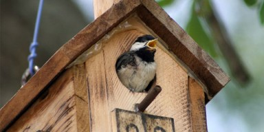 small bird at entrance of nest box
