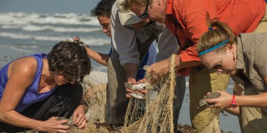 birds being removed from net
