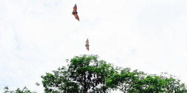 two bats flying above a tree