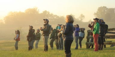 Researchers standing and looking across a foggy field