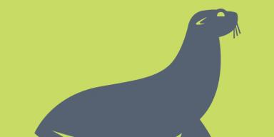 sea lion illustration