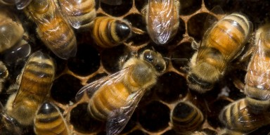 A group of bees in a hive crawling on honeycomb