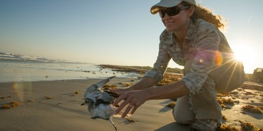 A female scientist releasing a bird on the beach