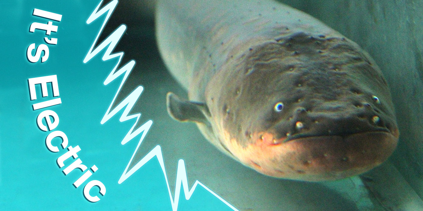 "a close-up view of an eel's face with the words ""it's electric"" on the side of the image"