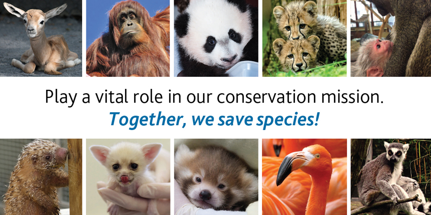 "photos of animals and the text ""we save species"""