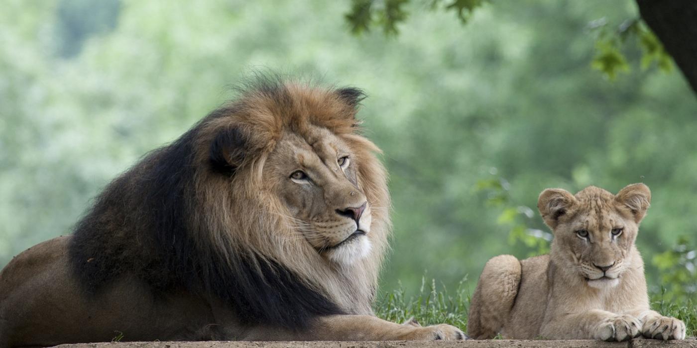 Snore & Roar Sleepovers for Families | Smithsonian's ...